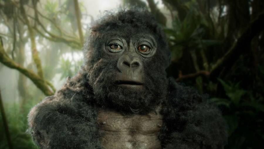 Los Gorilas cantan al unísono a la hora de cenar