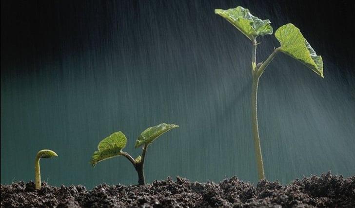 small-plants-growing-1-ia4mu09igm-1024x768