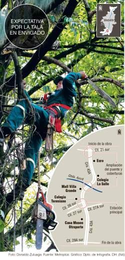 Tumbaron el primer árbol del Tunel Verde de la Avenida el Poblado ¡¡¡ Medellín indignado
