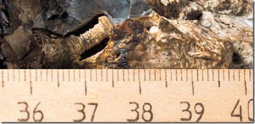 Descubren artefacto parecido a un tornillo de más de 300 millones de años